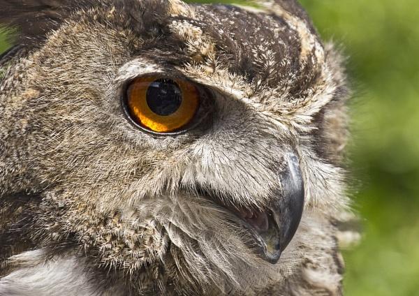 Staring Eye by RonW1123