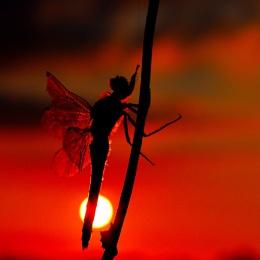dragonfly bij night