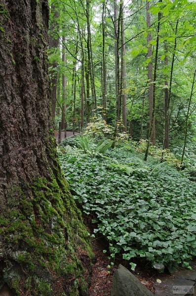 Moss and Trees, Portland Oregon by stevelink