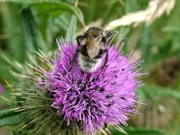 buzzy bugging