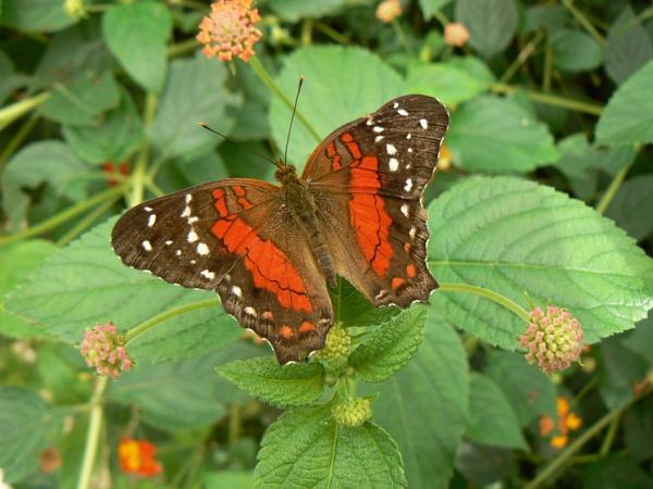 Butterfly world by eddie1