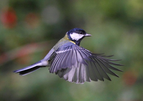 Hovering TiT