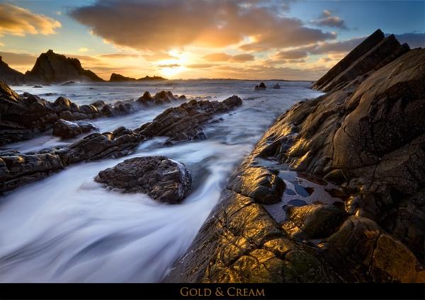 Gold & Cream by dmhuynh72