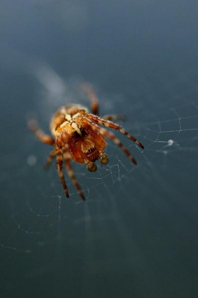 Spider 2 by DanZed69