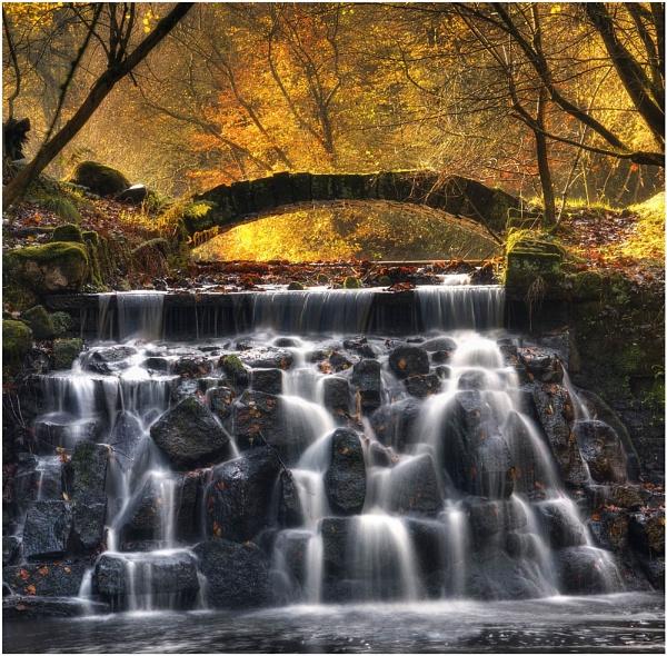 Sunnyhurst Autumn Blaze by JanieB43