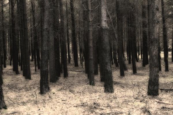 Trees by grt