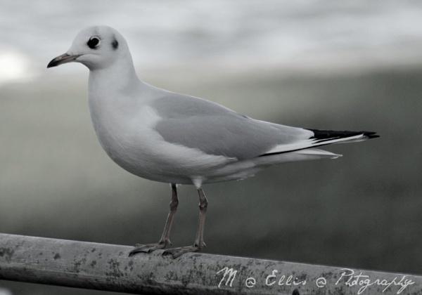 bird pose by martjellis