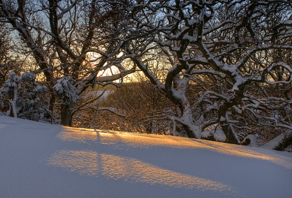 Low Winter Sun by maphotography