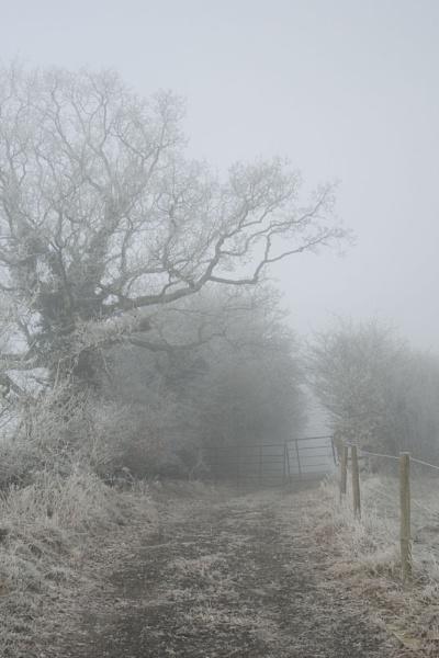 Winter by JanetKenyon