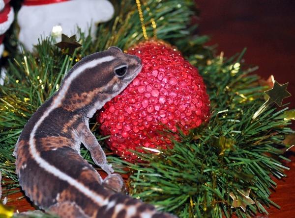A Gecko Christmas by Maz68
