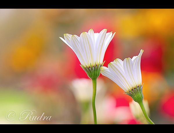 ~ Romance ~ by Rudra