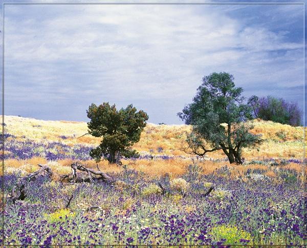 Living Desert by annettep38