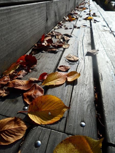 Fallen leaves on steps by schulmanjb