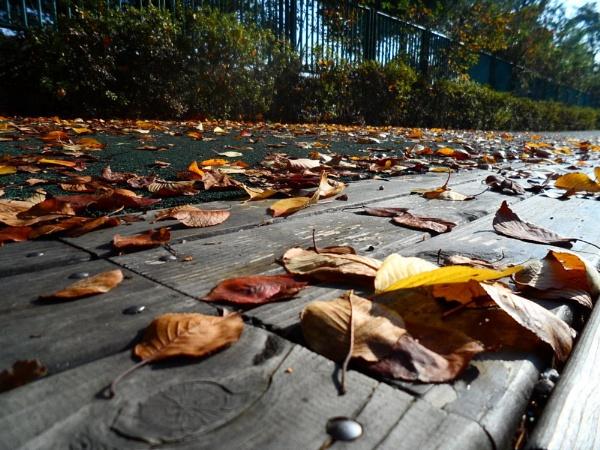 Fallen leaves by schulmanjb