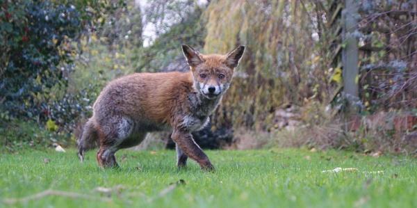 ...Foxy... by Lu1989