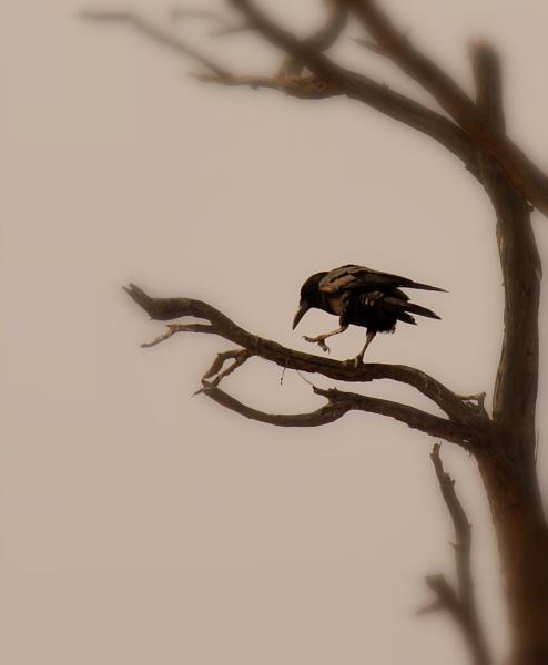 Dark silence by Elsabe