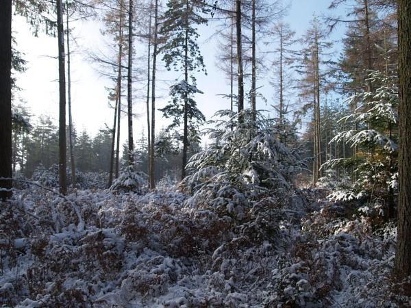 winter by raymond18