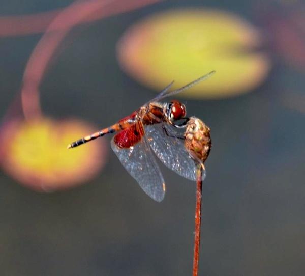 Buzzing around by kmfletch