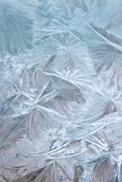 Ice Flowers #1