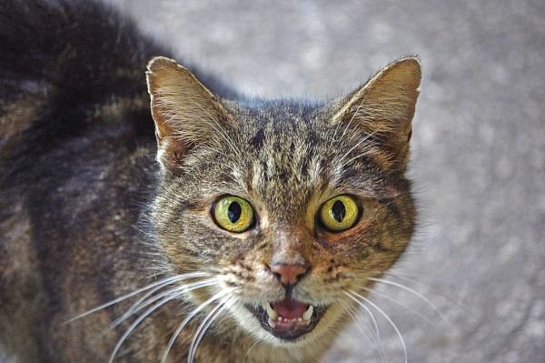ZEEBA, a barn cat by wsteffey