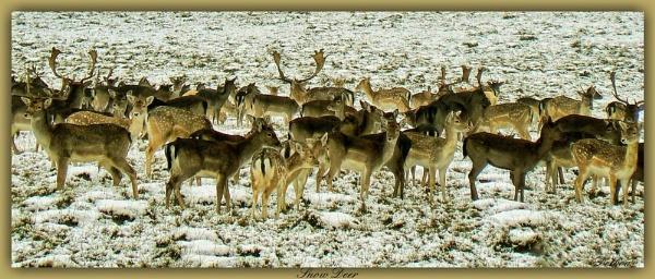 Snow Deer by Delbon