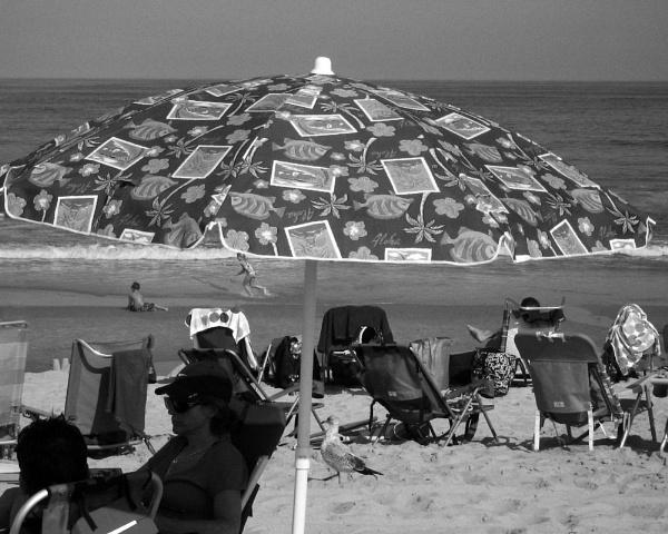 Cap Cod, Summer by motamanx