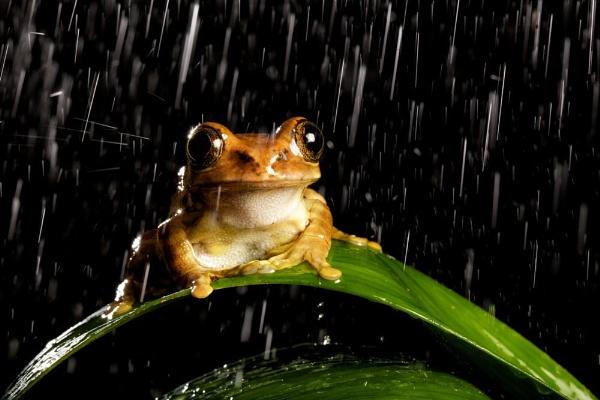 Tree frog in the night rain by bridge99