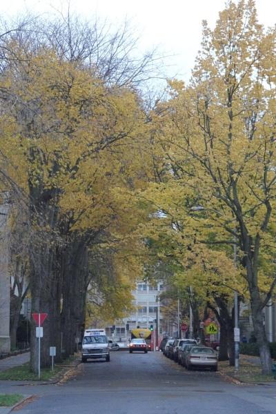 Yellow Trees by Deza23