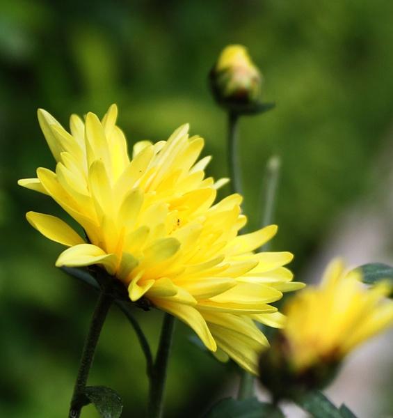 Flower in wild by santosh275