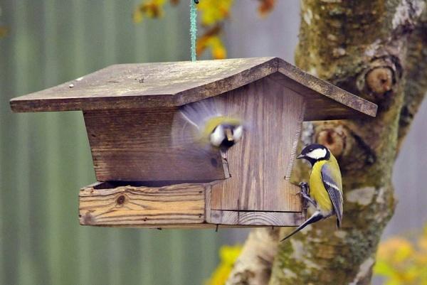 Two birds. by kuvailija