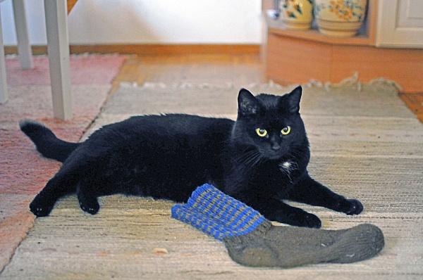 Laku`s sock. by kuvailija