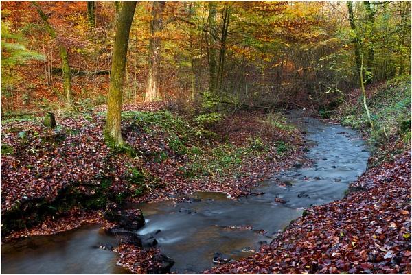 Winding Stream - Sunnyhurst Woods by JanieB43