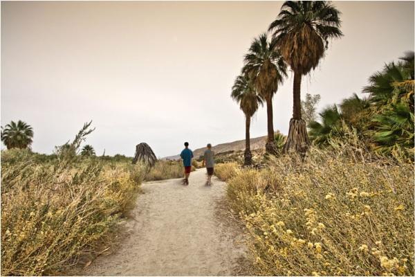 Desert Trail by Daisymaye
