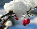 """""""winter berries"""""""