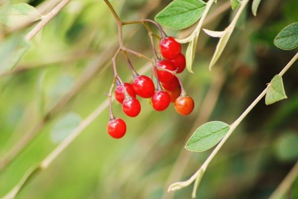 Season\'s Red! by Chinga