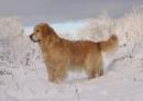 Posing in a winter wonderland