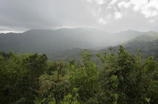 Rain Forrest by mannypr
