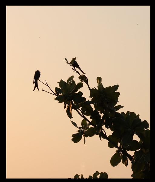 Birds in morning sun by santosh275