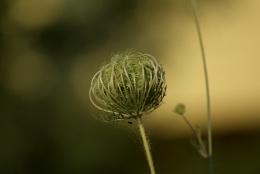 A wildflower