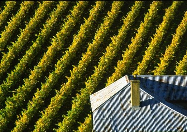 Corrugated Vines by steveowea