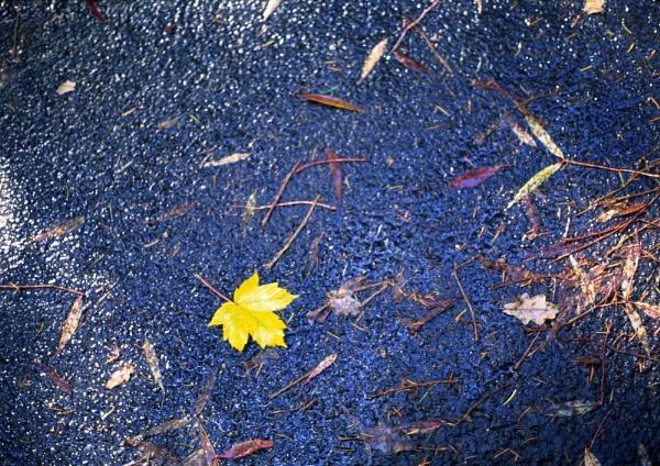 Leaf me alone! by steveowea