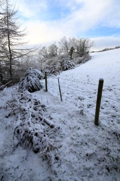 Winter Woods B by Dlees78