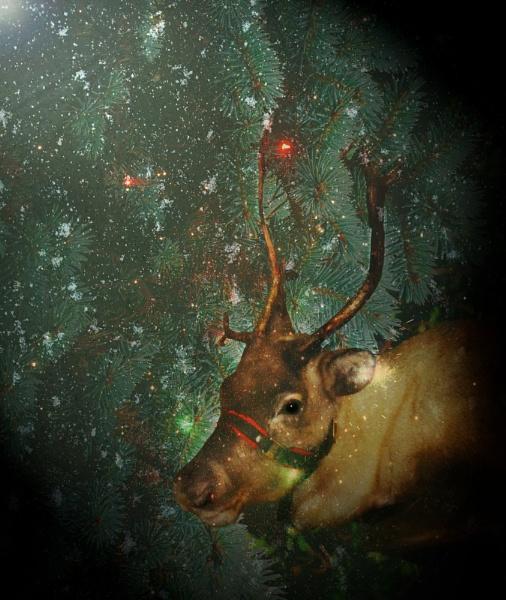 Merry Christmas! by gingerdelight