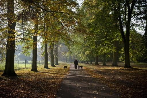 Autumn Daze by Moey