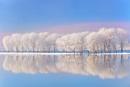 winter reflexions