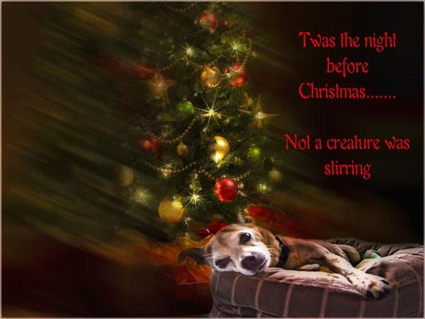 Merry Christmas by Daisymaye
