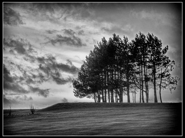 Knott End Trees by martinrobinson