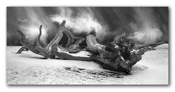 Driftwood by bryan26