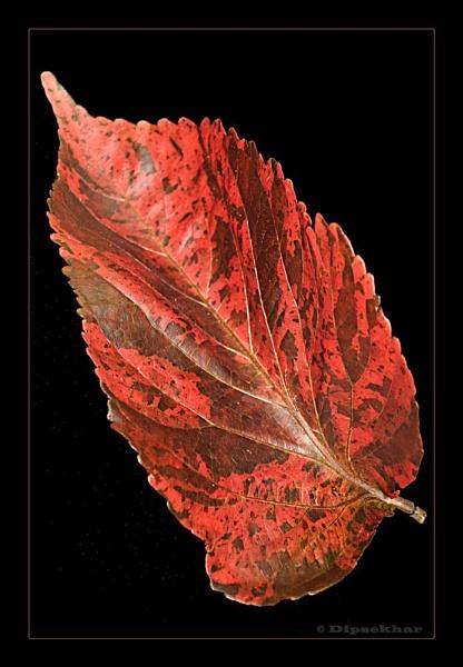 Leaf by dipsekhar