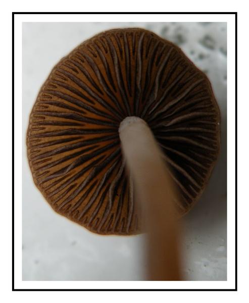 Snowy mushroom by tonypic